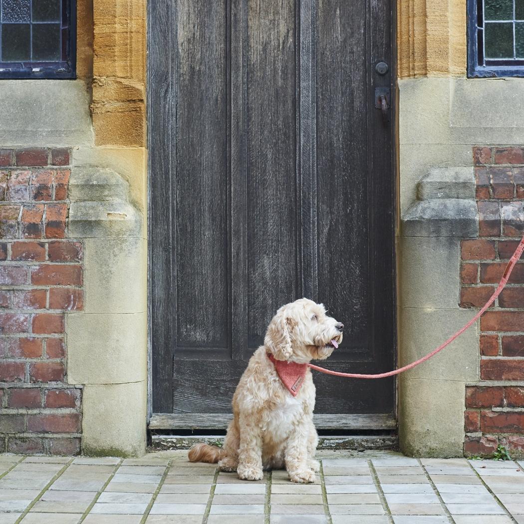 Tweed Dog Lead - Orange , Dog leads ,