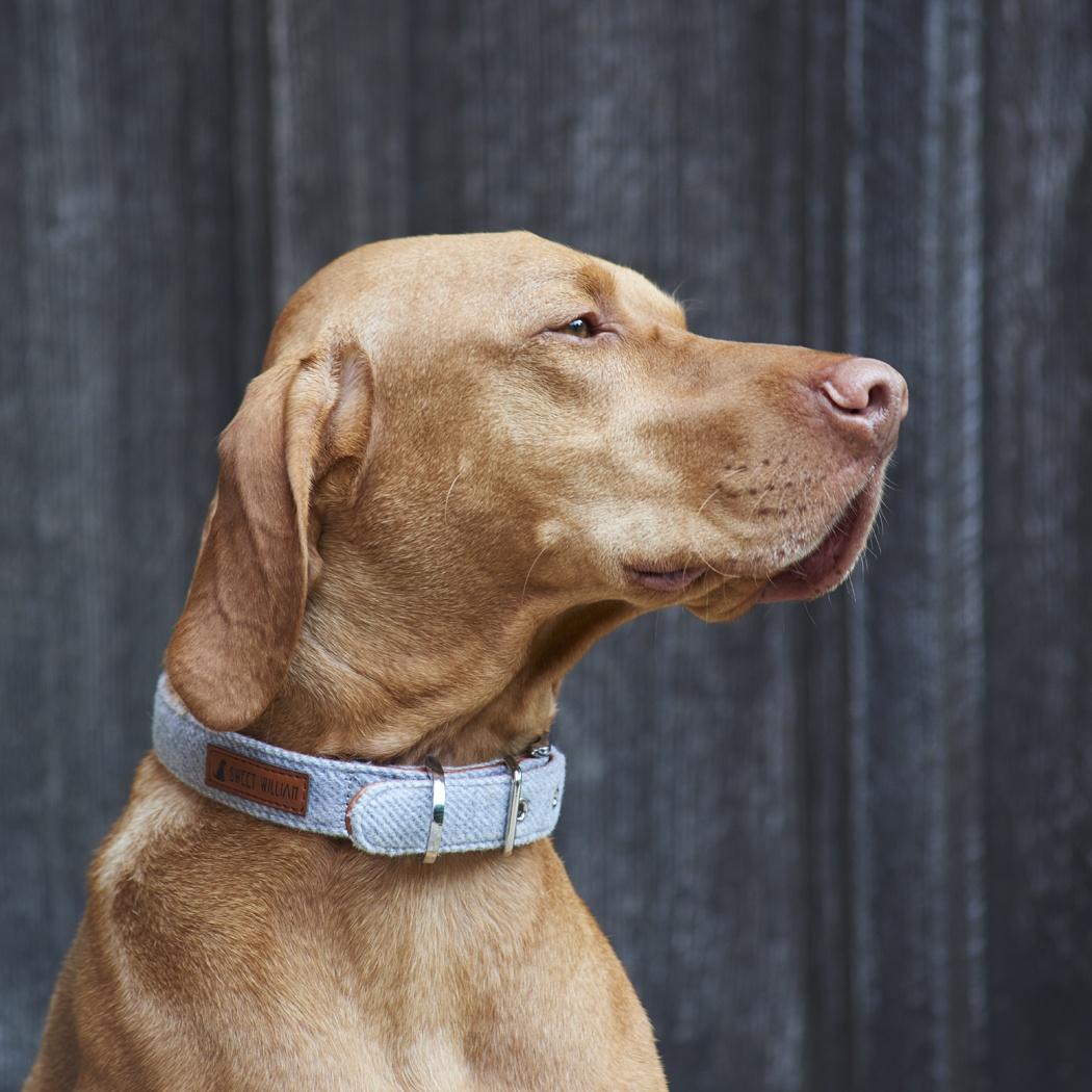 Tweed dog collar - grey , dog collars ,