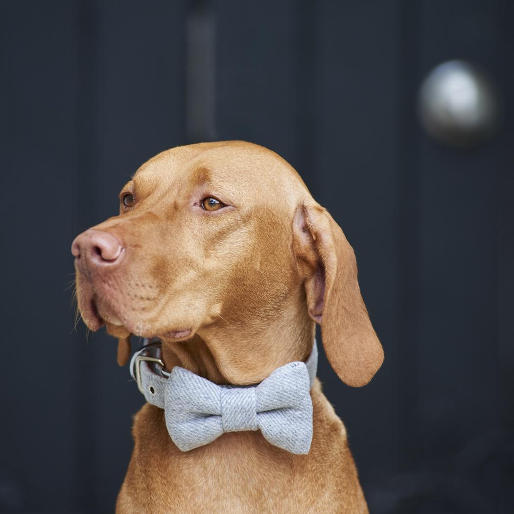 Tweed bow tie - grey , Dog Bow Ties ,